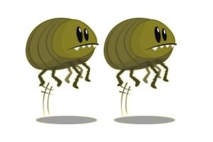 Os animais (insectos e bichos) que andam em nossa casa