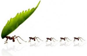 Formigas em casa, como eliminá-las
