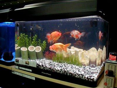 Limpar a água do aquário