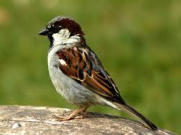 Proteger a sua instalação dos ninhos de pardais